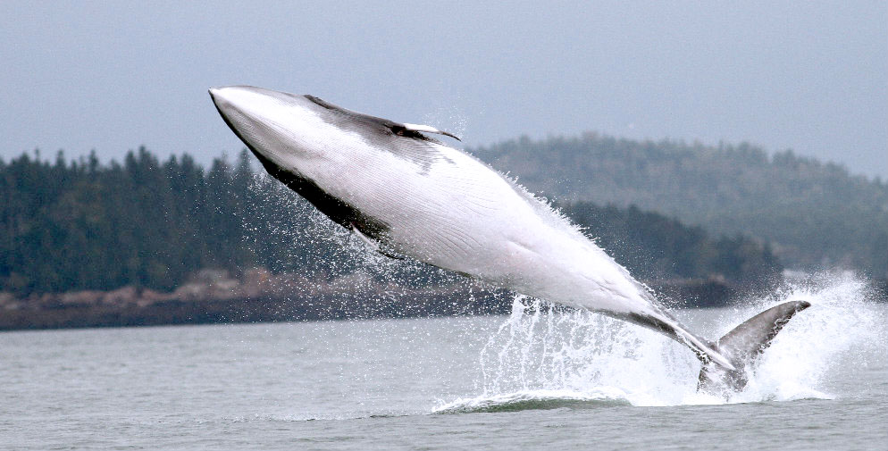 maine whale watch tours