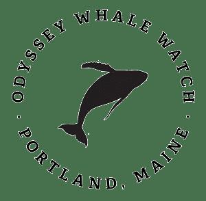 Odyssey Whale Watch